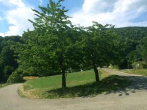 Ribeaugoutte et la nature