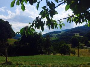 Nature et Ribeaugoutte