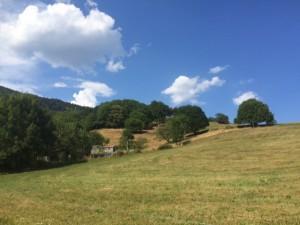 Forêt et nature à Ribeaugoutte